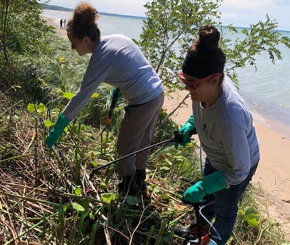 Two members of a field crew treat invasive species along the lakeshore.