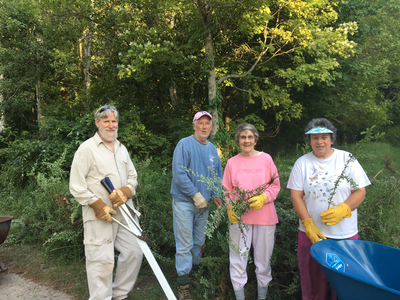 Volunteers help pull invasive species.